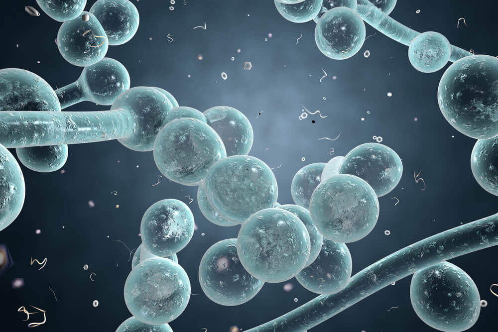 Agenți microbieni care provoacă infecții vaginale