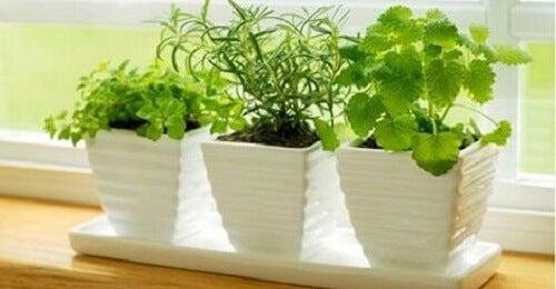 10 plante care atrag energiile pozitive