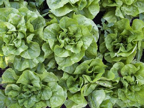 Alimente care hidratează pielea precum salata verde