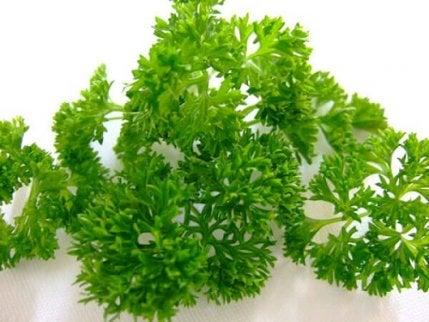 Detoxifierea rinichilor cu pătrunjel verde