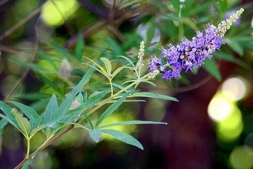 plante-pentru-ovarul-polichistic