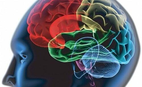 Creierul îți arată dacă ești rațional sau intuitiv