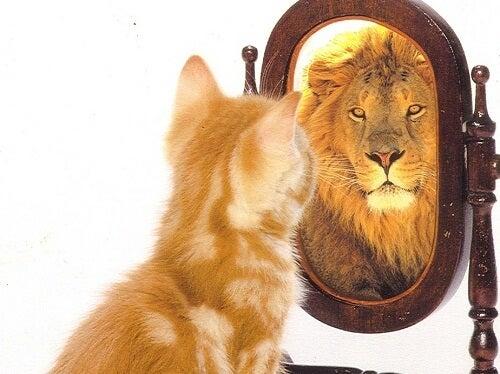 Felină în oglindă