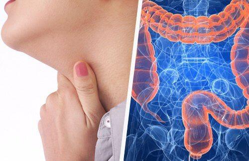 Știi că există o legătura intre gât și intestine?