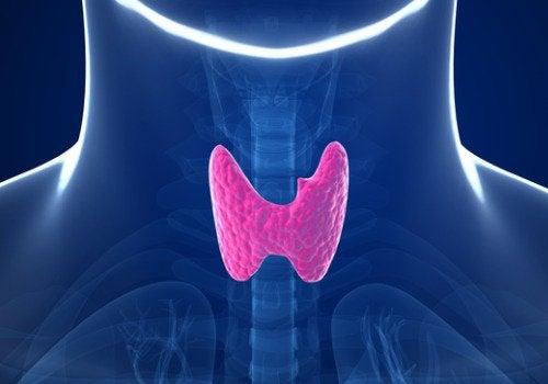 Laptele de migdale: tiroidă