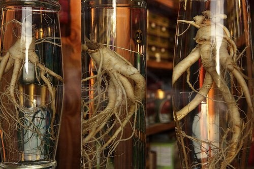 Plante medicinale pentru slăbit precum ginsengul