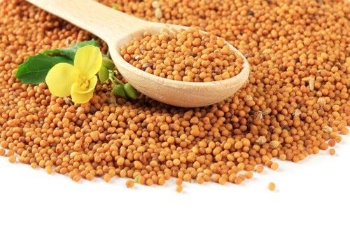 Semințe de muștar