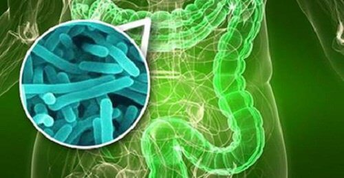 bacteriile intestinale pierdere în greutate bbc pierde greutate mici mici