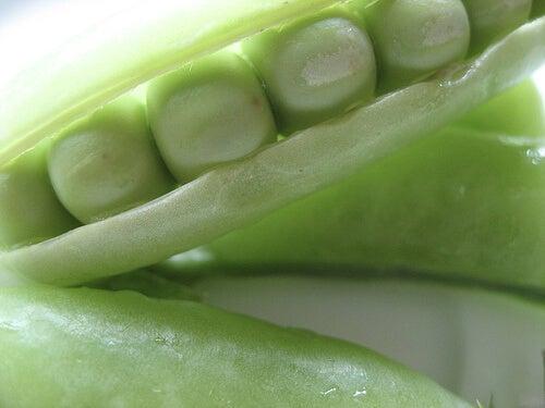 Plantă leguminoasă mazăre