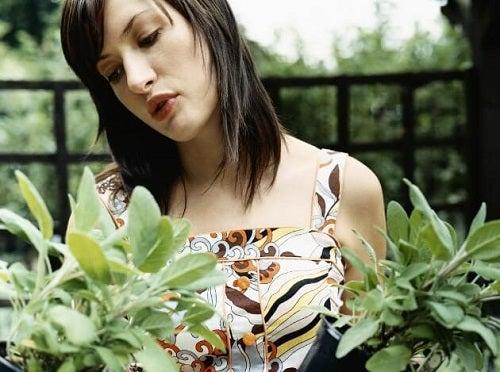 Plante vindecătoare pe care le poți cultiva în grădină
