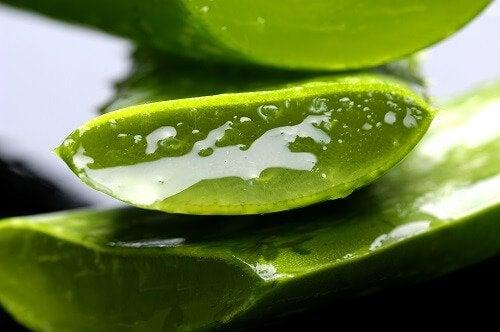5 plante vindecătoare pe care le poți cultiva acasă