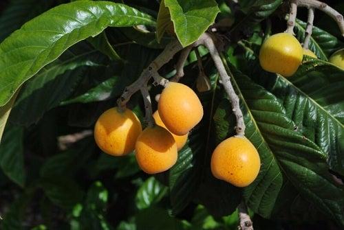 Remedii naturiste pentru steatoza hepatică cu fructe