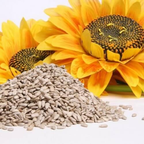 Semințele de floarea soarelui te ajută să renunți la fumat