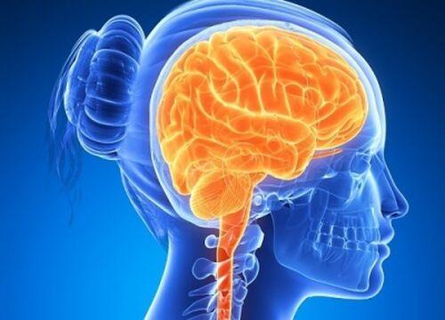 6 alimente pentru creier activ și sănătos