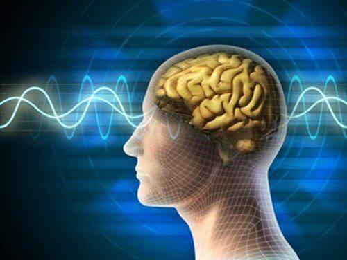 Creier sănătos