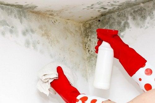 Mucegaiul poate distruge permanent suprafețele