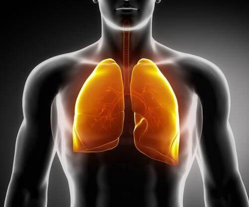 Plămânii sănătoși