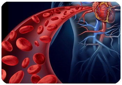 Sfecla stimulează formare de globule roșii