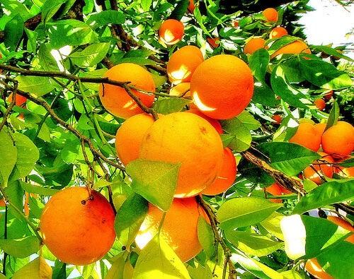 Portocalele sunt recomandată pentru a trata artrita reumatoidă