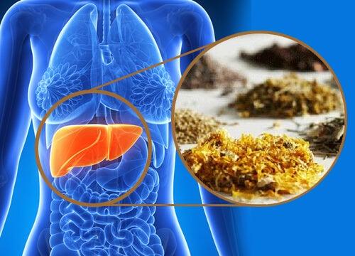 Detoxifierea ficatului cu plante medicinale
