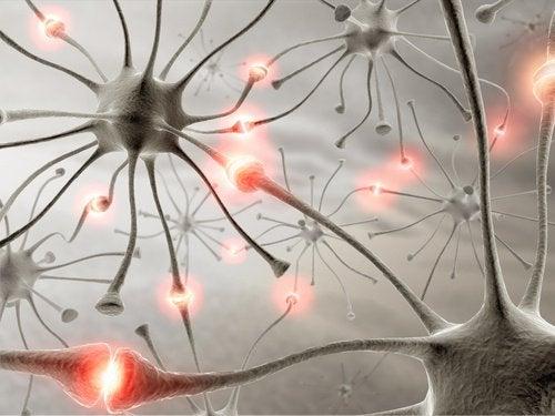Mersul pe jos este benefic pentru creier