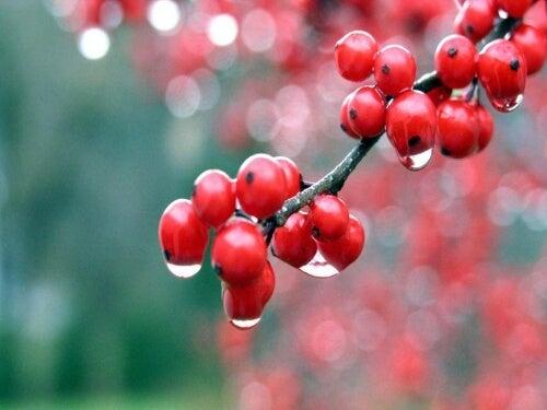 Plante medicinale care îți oferă energie precum guarana