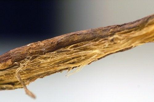 Psoriazisul se ameliorează cu lemn dulce