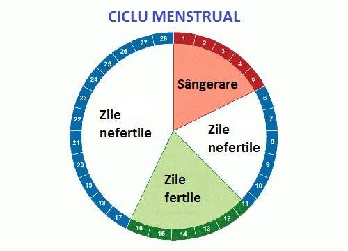 Care sunt zilele tale de fertilitate maximă?