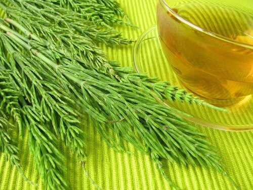 Plante benefice pentru sistemul renal incluse în ceaiuri