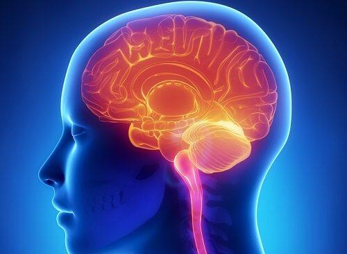 Dieta pentru creier