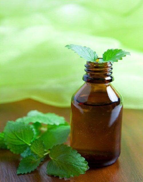 Cum se prepară ulei de mentă puternic aromat