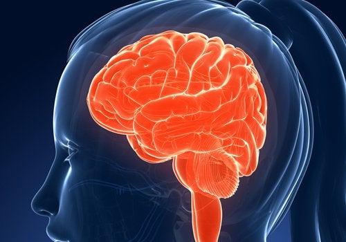 Dieta pentru creier sănătos