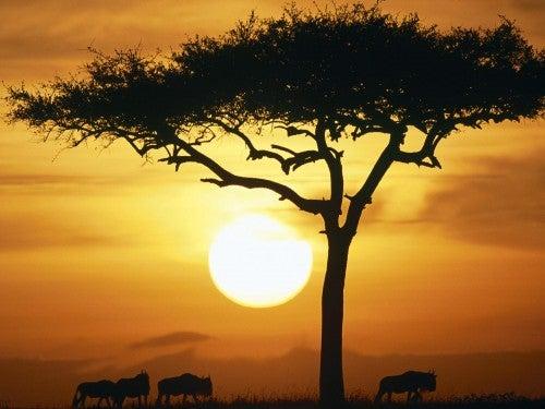 Peisaj din Africa