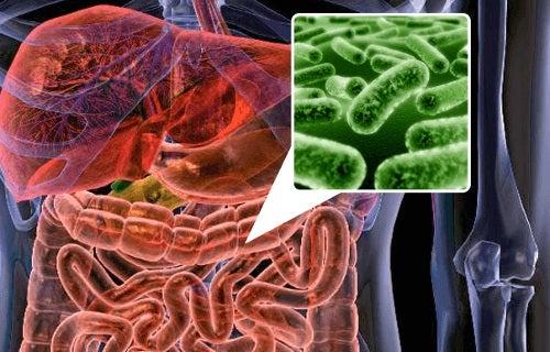 dieta refacere flora intestinala