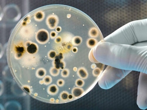 Bacteriile prezente pe bani