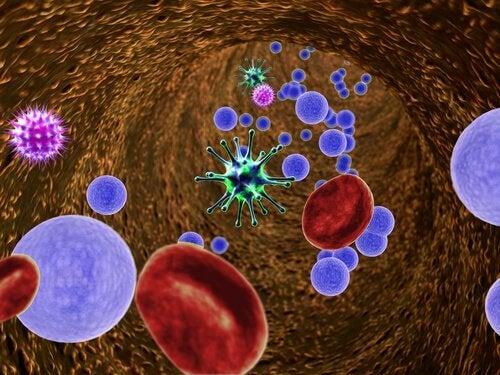 Bacteriile intestinale afectează sistemul imunitar