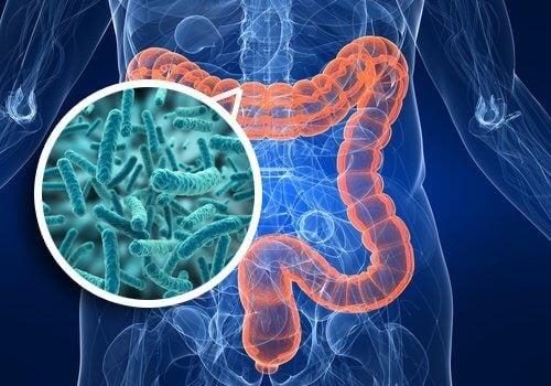 sănătate intestinală pentru pierderea în greutate)