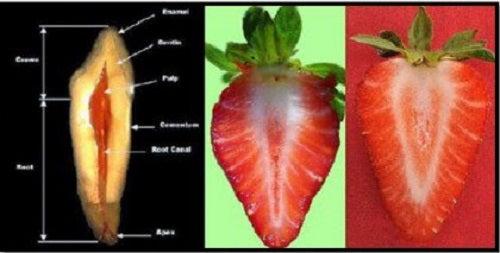 Unul din cele mai bune alimente sănătoase sunt căpșunile