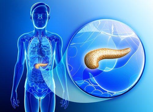 Pancreasul este un organ foarte important