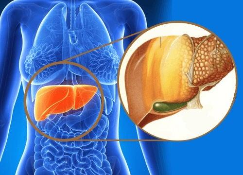 Uleiul de cocos ameliorează ficatul gras