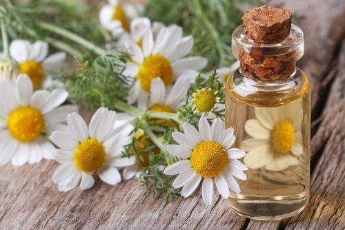 Un masaj cu ulei de mușețel roman te ajută previi bufeurile