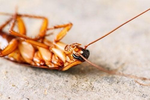 Gândacii de bucătărie sunt printre insectele cele mai detestate