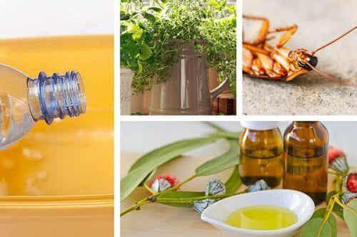 Alungă insectele din casă cu produse naturale