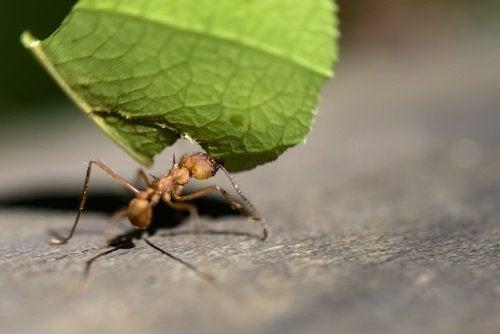 Utilizările surprinzătoare ale lămâii pentru alungarea furnicilor