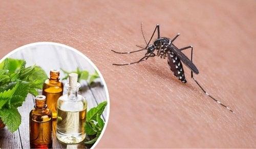 Poți alunga țânțarii cu produse naturale