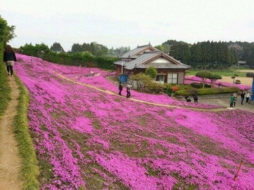 O grădină cu flori ca gest de iubire impresionant