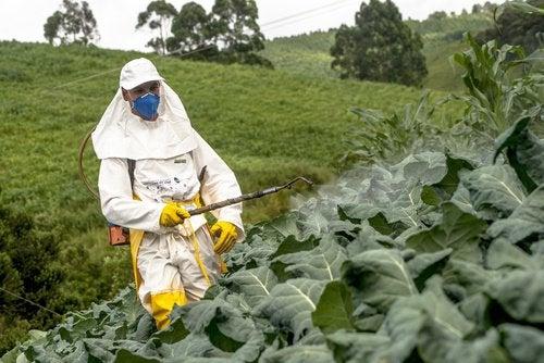Alimentele tratate cu pesticide îți pun în pericol sănătatea