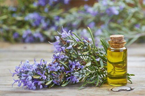 Regenerarea părului cu ulei de rozmarin