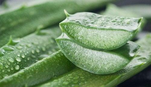 Aloe vera este unul dintre acele uimitoare remedii pentru vergeturi