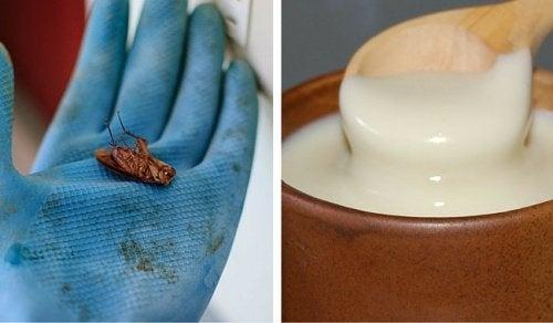 Gândacii de bucătărie: cum să-i elimini definitiv